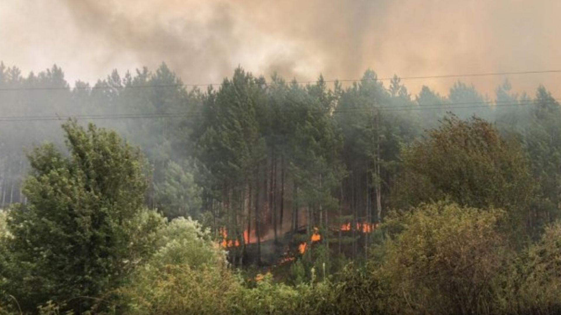 Пожари бушуват в страната: Огнена стихия в Перник обхвана и гората край Големо Бучино