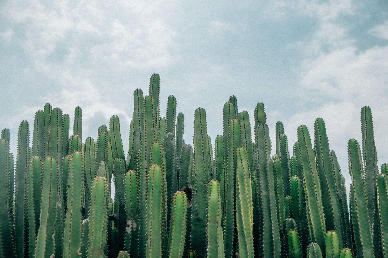 В пустинята кактусите оцеляват и годин без вода. Хората - не.