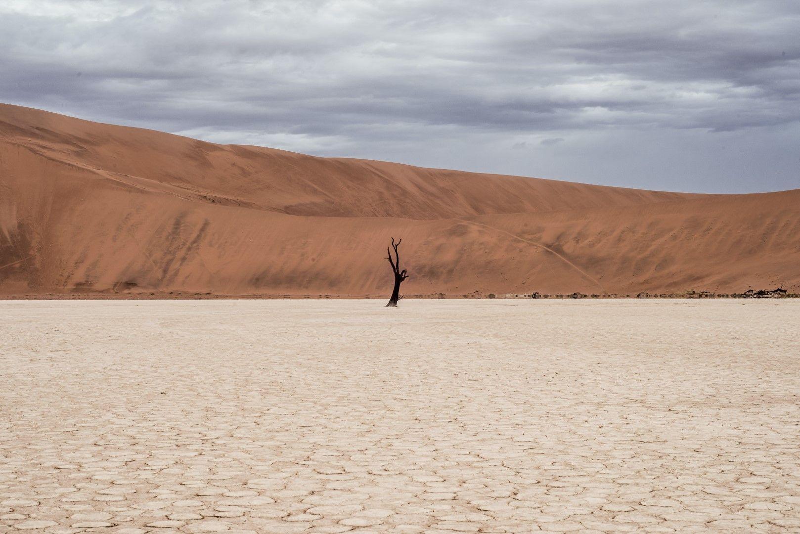 Самотно изсъхнало дърво в глиненото поле Дедфлей в Намибия.