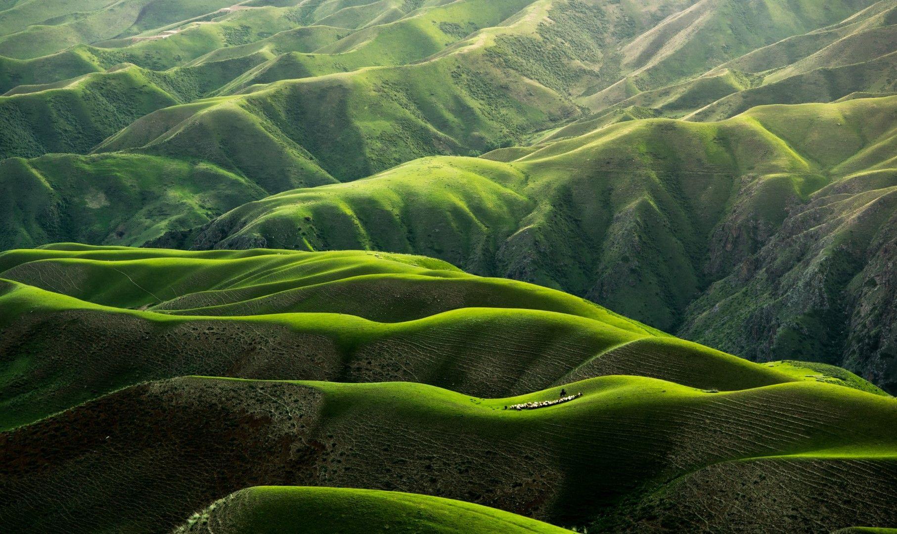 Зелени възвишения в провинция Синдзян в Китай.