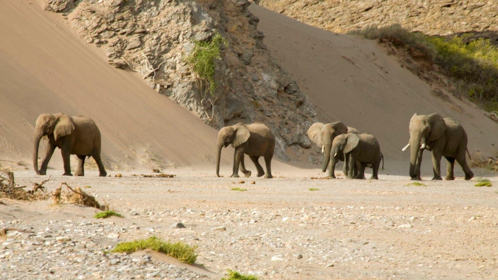 Слонове, зебри, лъвове и други животни са се адаптирали към тежките условия на Брега на скелетите
