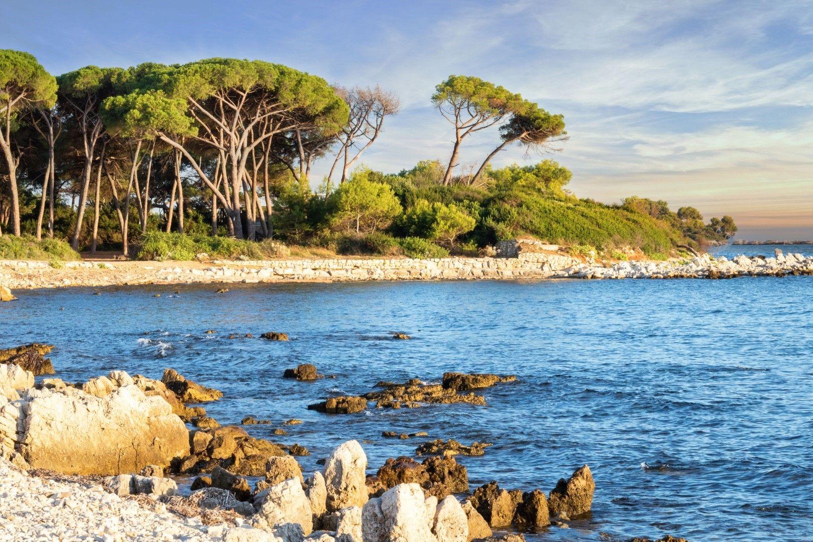 На остров Сент Онора можете да се разхождате сред иглолистни гори от средиземноморски чадъровиден бор