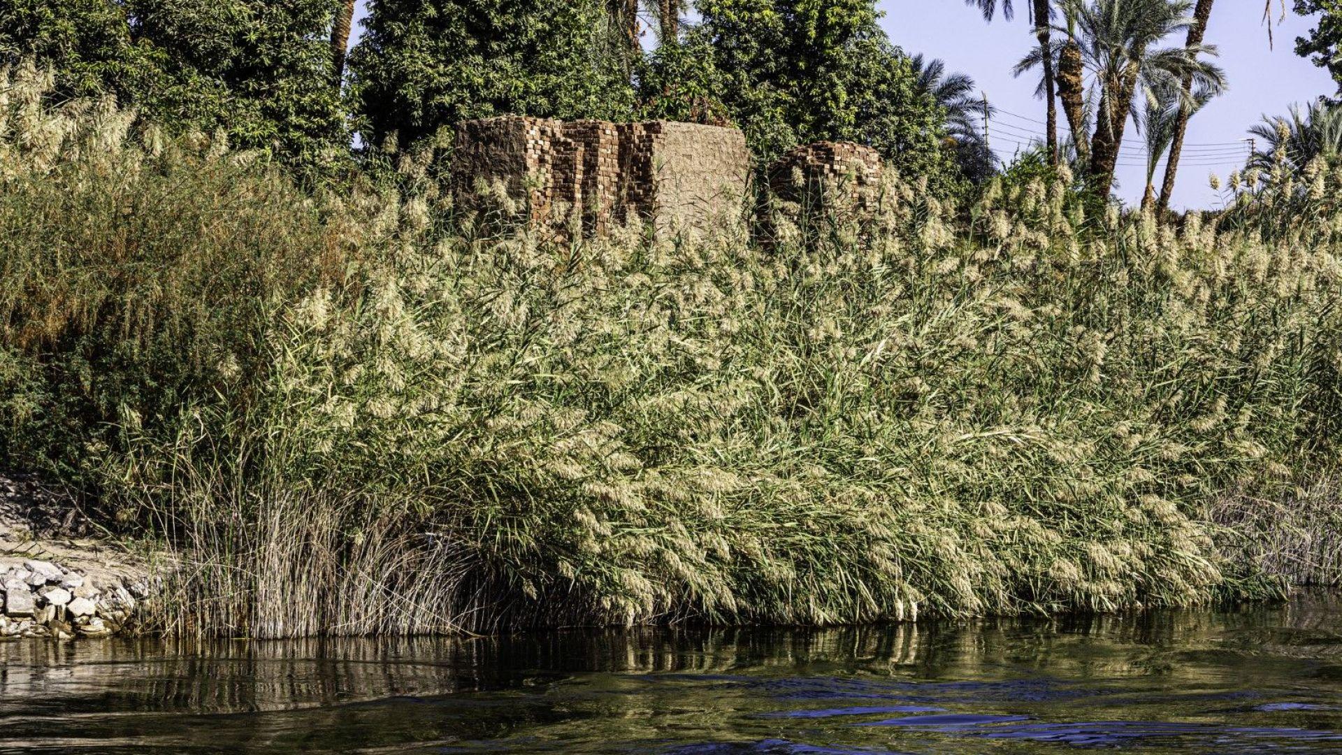 Фермери се надяват да спасят папируса в делтата на река Нил
