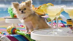 Лондонски бар предлага коктейли и грижи за кучета