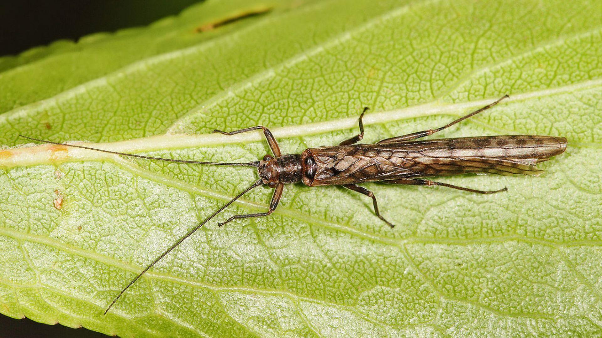 Обезлесяването може да предизвика бързи еволюционни промени при насекомите