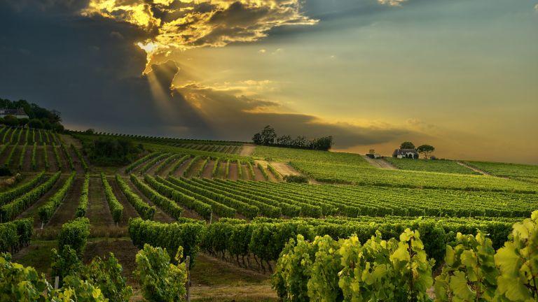 Френските винари в надпревара с времето, заради климатичните промени