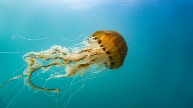 Двуметрови медузи се появиха по плажовете на Коста дел Сол (видео)