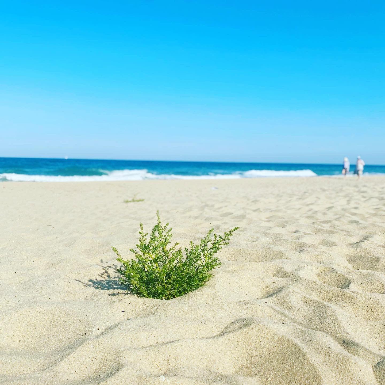 Утрин на дивия плаж