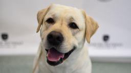 Световен ден на кучето: Коя порода има по 6 пръста на лапите и още любопитни факти