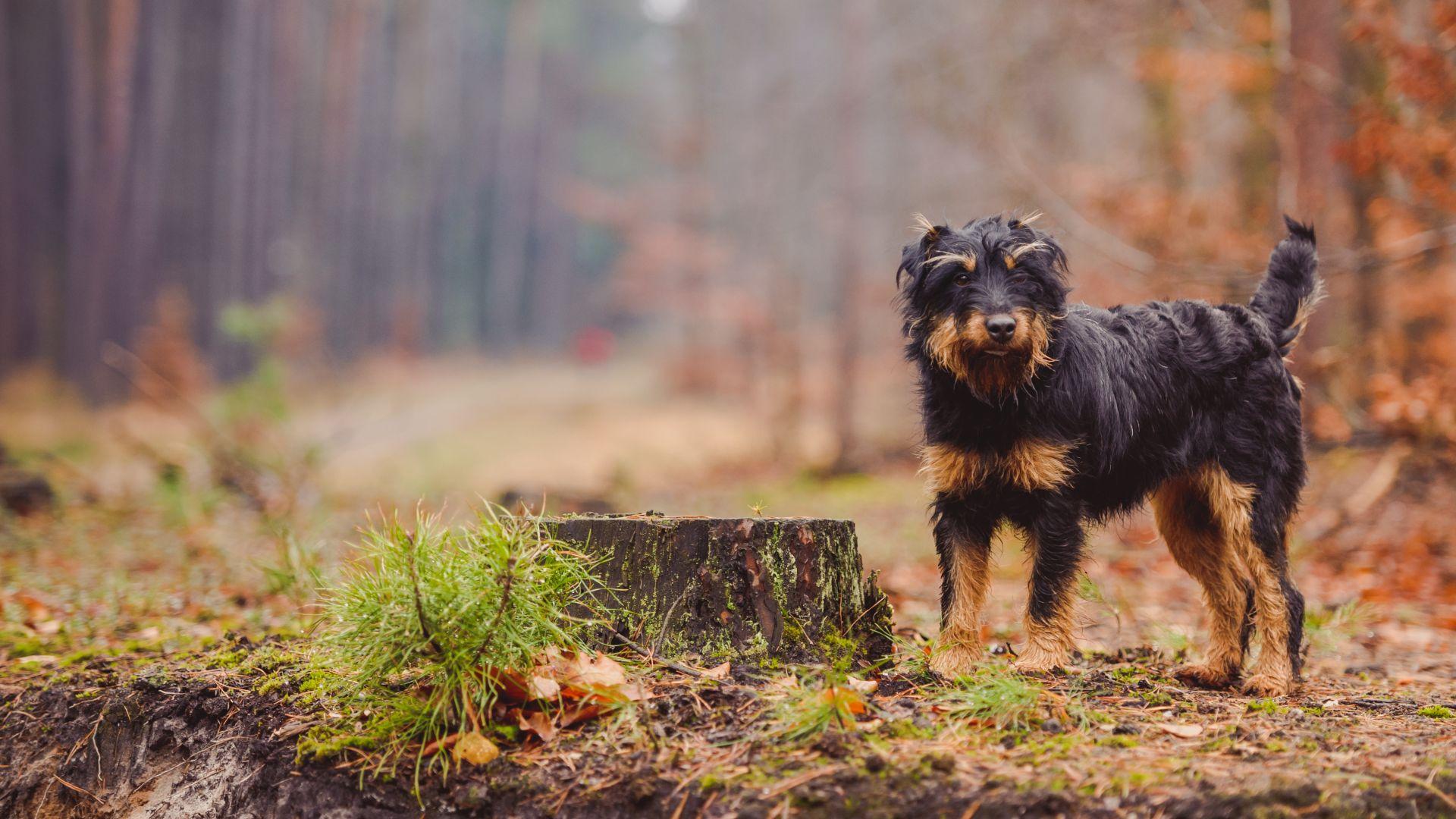 Изгубено куче измина 380 км, за да се прибере у дома
