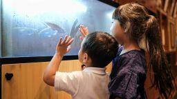 Японски ученици се грижат за риби и накрая решават дали да ги сложат в тигана или да ги пуснат в океана