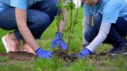 Закон изисква всеки ученик и студент да засади 10 дървета, за да получи дипломата си