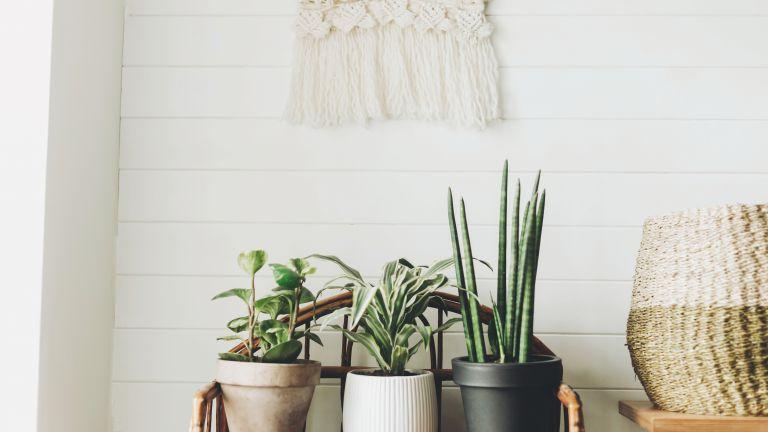 """Градските растения, които са тренд в Инстаграм и не можеш """"да убиеш"""" у дома"""