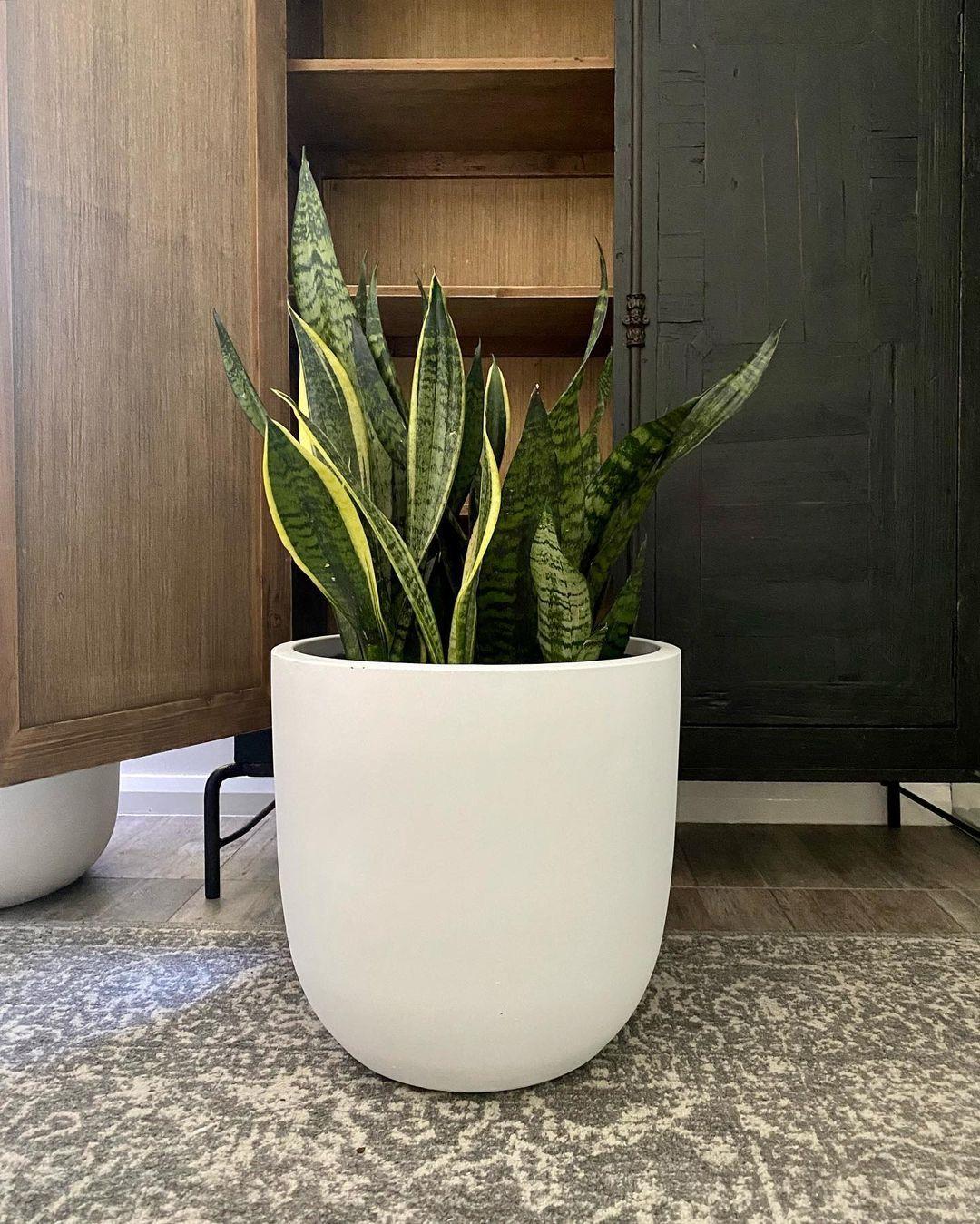 Змиярниково растение