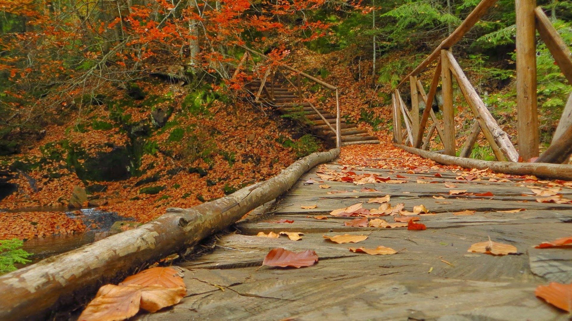 Едно от десетките мостчета в Каньона на водопадите край Смолян