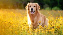 Съд призна правото на кучета на обезщетение за морални щети