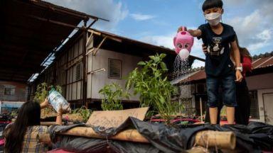 """""""Покривни градини"""" избуяват върху изоставените тайландски таксита (видео)"""