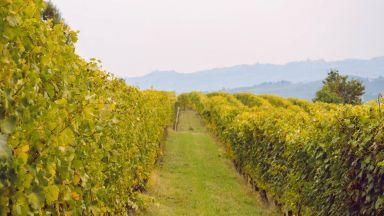Бароло е първият Град на виното в Италия за 2021