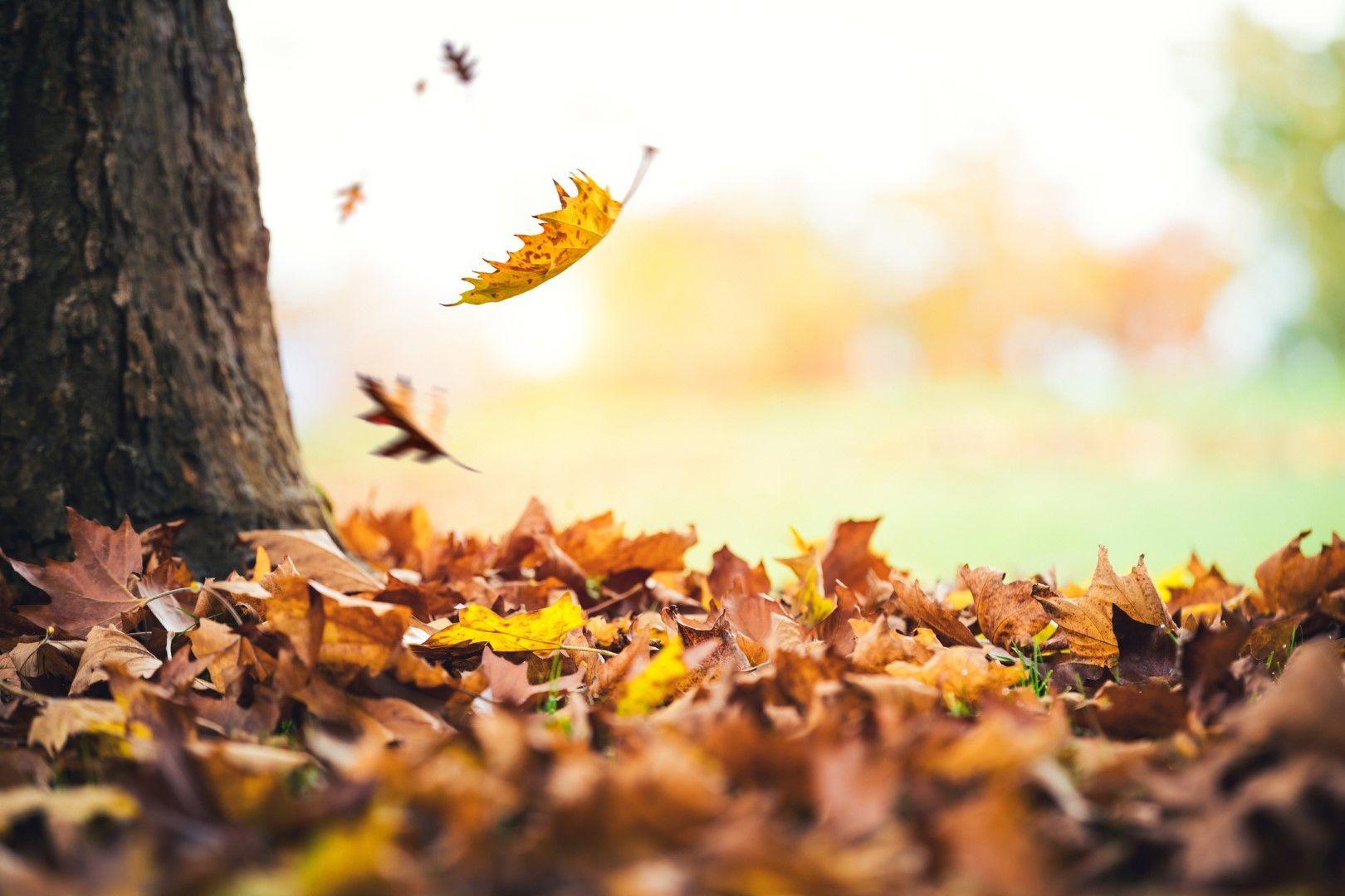 Есента преобразява градовете и въпреки студе, ги прави да изглеждат по-уютни