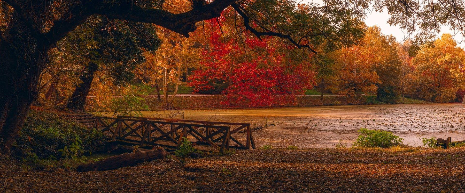 """Лесопарк """"Липник"""" е място за чай в термоса и лежернин разходки"""