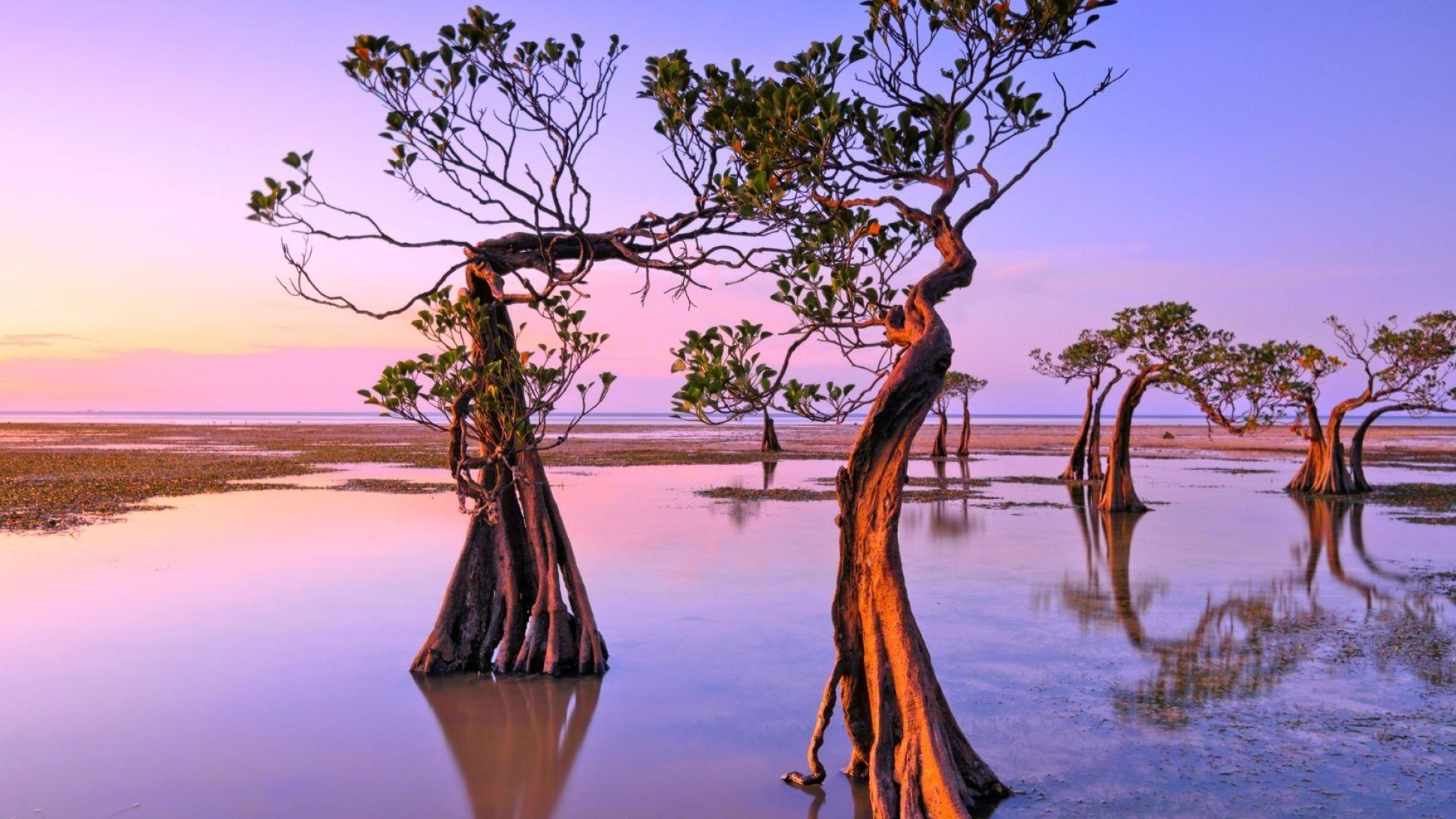 Чудесата на света: Танцуващите дървета на остров Сумба (снимки)