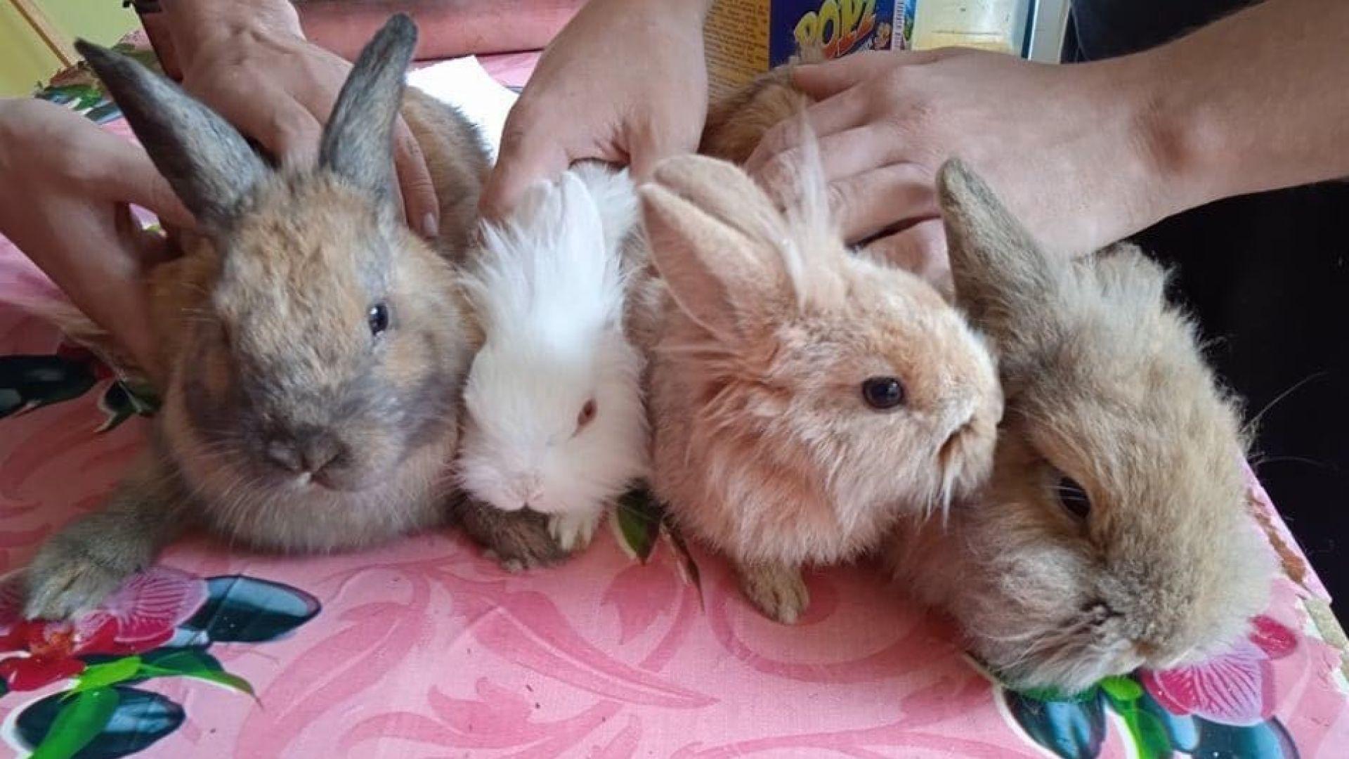 Откриха изоставени домашни зайчета в София, търсят им дом