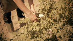 """""""SOS Българска роза"""" ще спасява малките розопроизводители в Средногорието (видео)"""