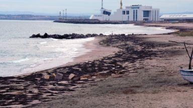 Водорасли превзеха бургаския плаж (снимки)