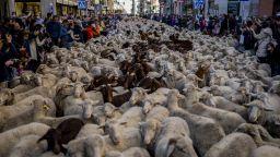Овце задръстиха улиците в центъра на Мадрид (видео)