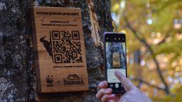 Табели с QR код разказват защо са важни мъртвите дървета на Витоша (снимки)